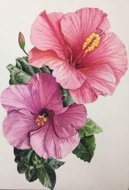 Hibiscus Syrian (Garden)