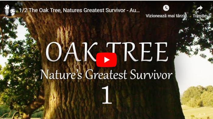 Stejarul - Un Supravețuitor Extraordinar al Naturii [VIDEO]