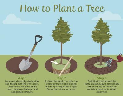 7 recomandări la plantarea pomilor procurați
