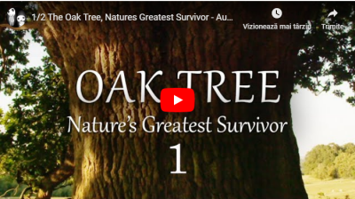 OAK TREE - Nature`s Greatest Survivor [VIDEO]