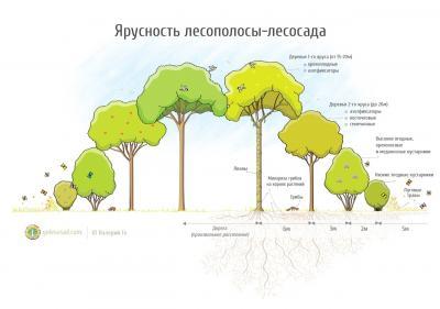 Высоко-Продуктивные Лесо-Полосы