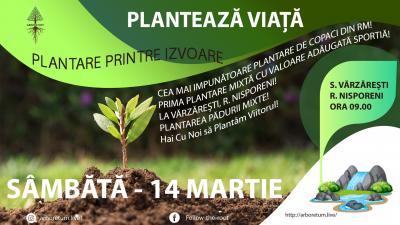 Prima Plantare Mixtă Cu Valoare Adăugată Sporită Din Moldova