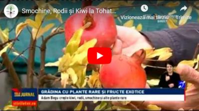 Kiwi, Rodii și Smochine la Tohatin