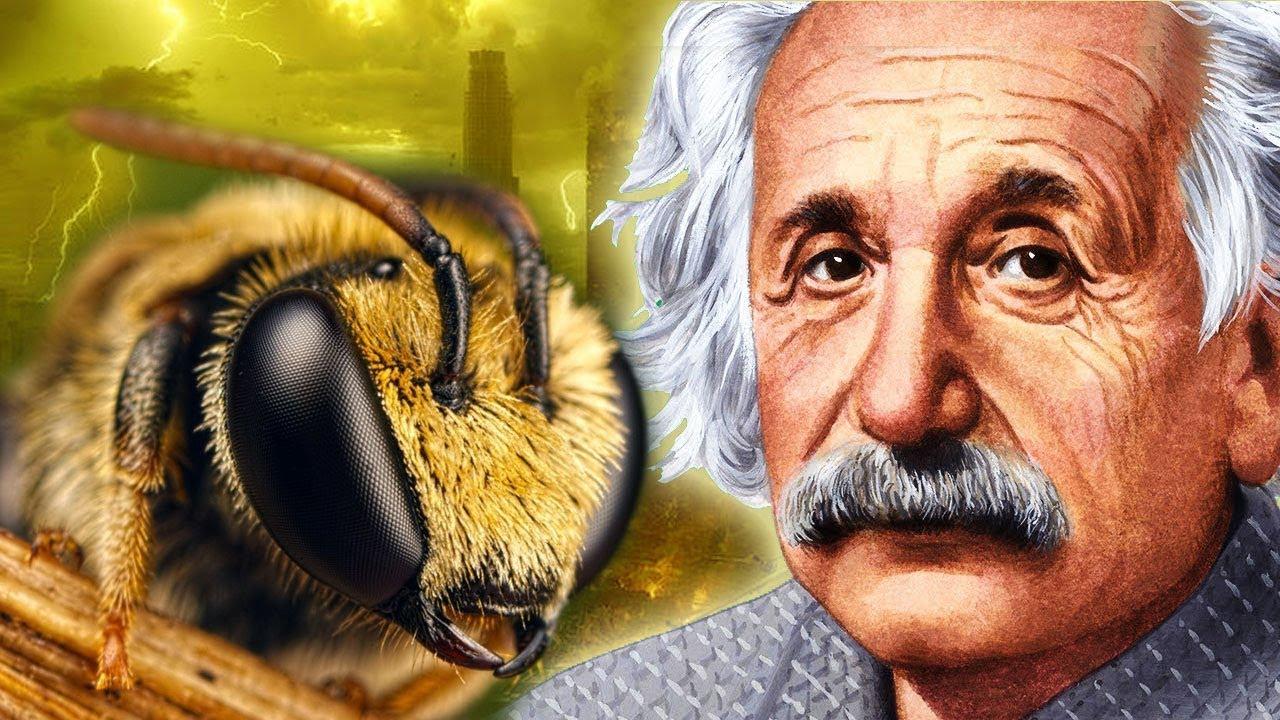 Эйнштейн о Пчёлах