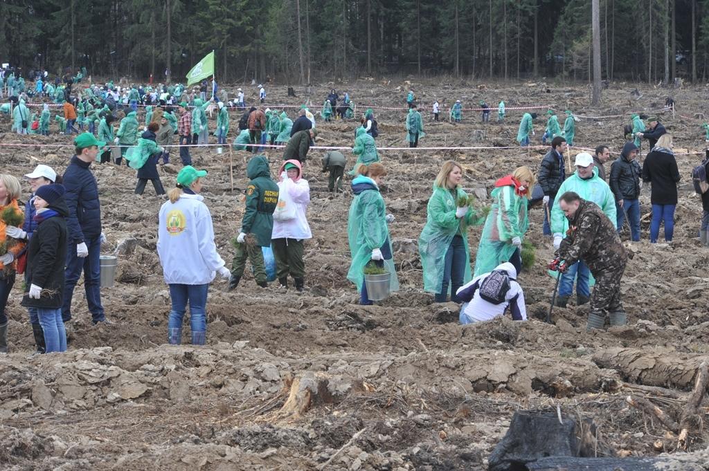 Организация сажает лес