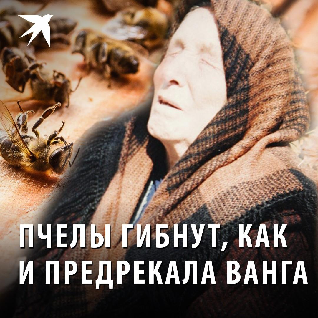 Ванга о Пчелах